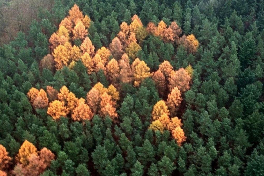 La storia della misteriosa foresta nazista