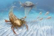 lo-scorpione-di-mare-gigante_01