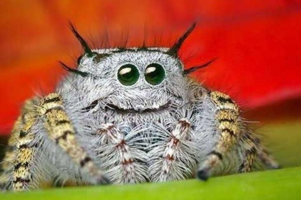 Sesso orale per le femmine di ragno