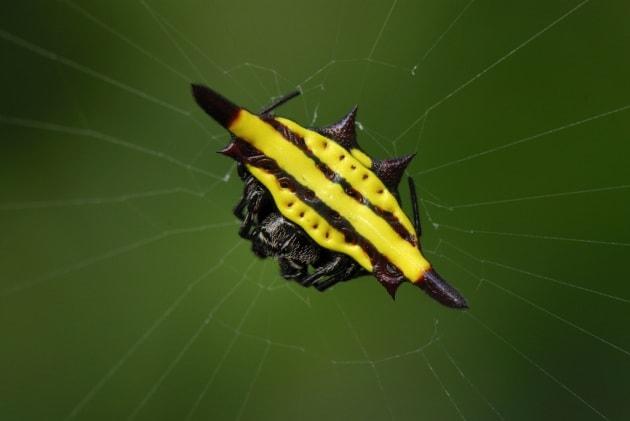 10 specie di ragni davvero irresistibili