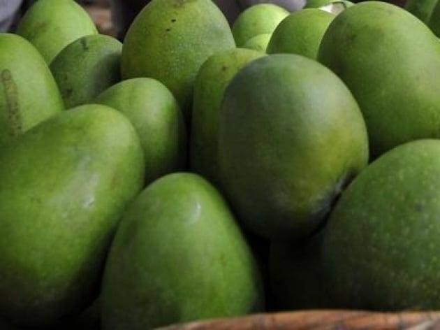 Mango, il