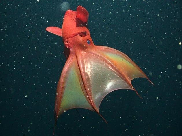 vampire-squid-sex