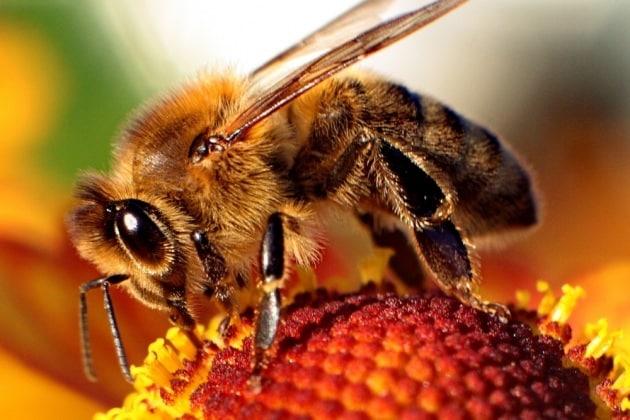 12 cose che (forse) non sai sull'olfatto e gli odori