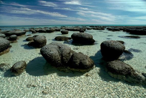 stromatoliti: la vita, 3,5 miliardi di anni fa