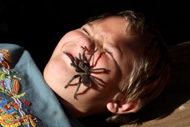 È vero che ingoiamo ragni mentre dormiamo?