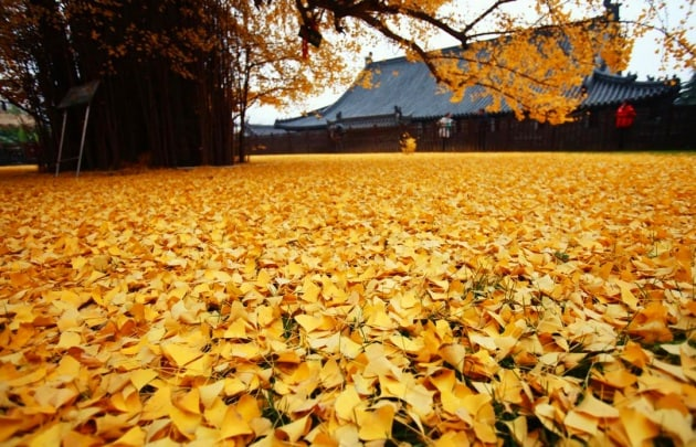 Come le foglie cambiano colore in autunno