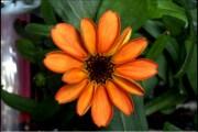 Questo non è il primo fiore sbocciato nello spazio
