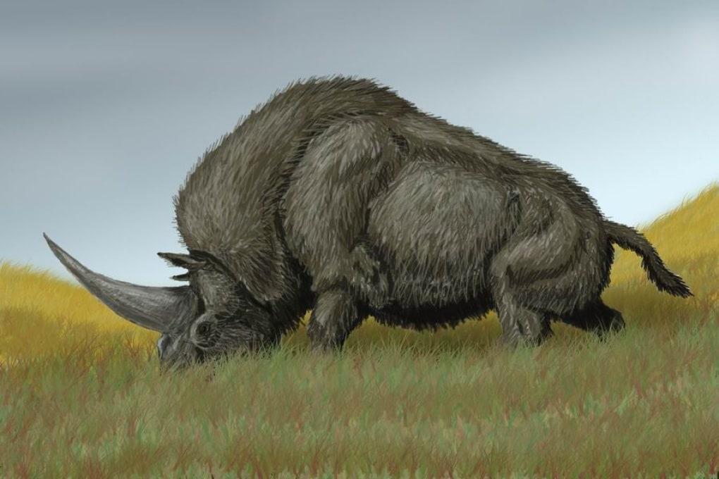 Gli unicorni sono esistiti davvero