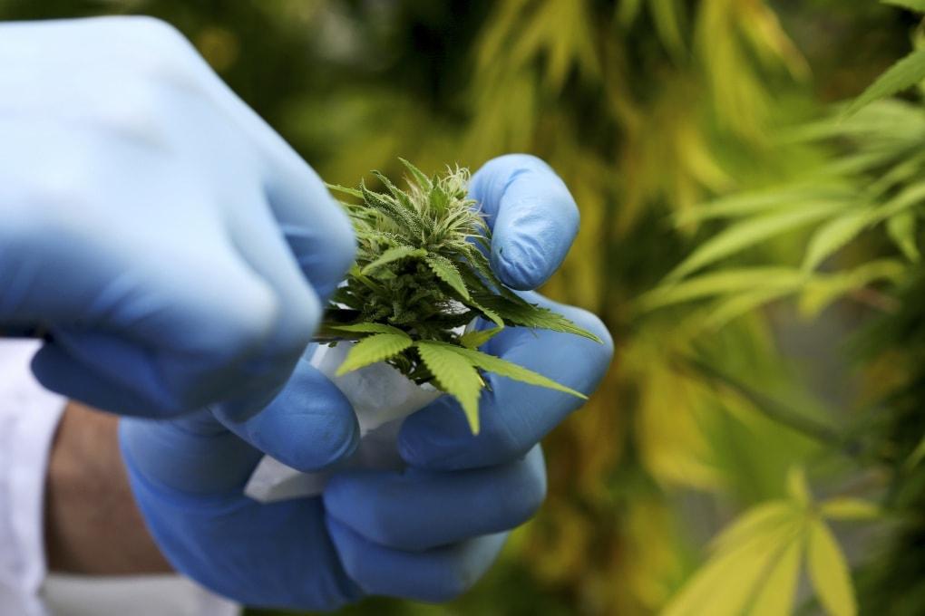 Il padre degli studi sulla marijuana