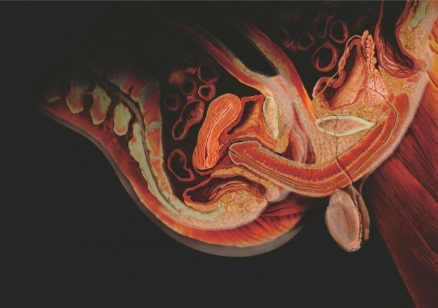 9 bugie sul corpo umano