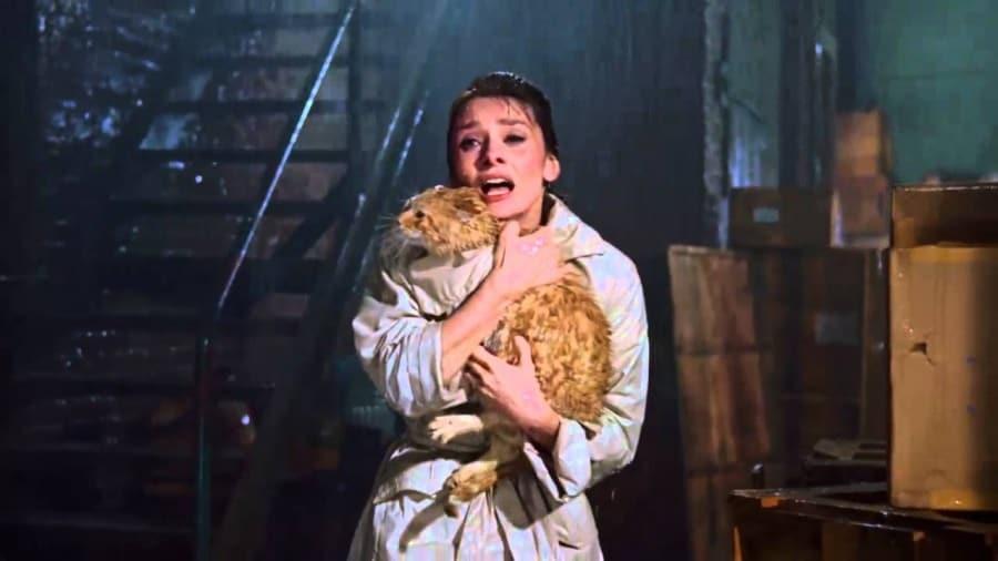 12 Cani E Gatti Da Oscar Focusit