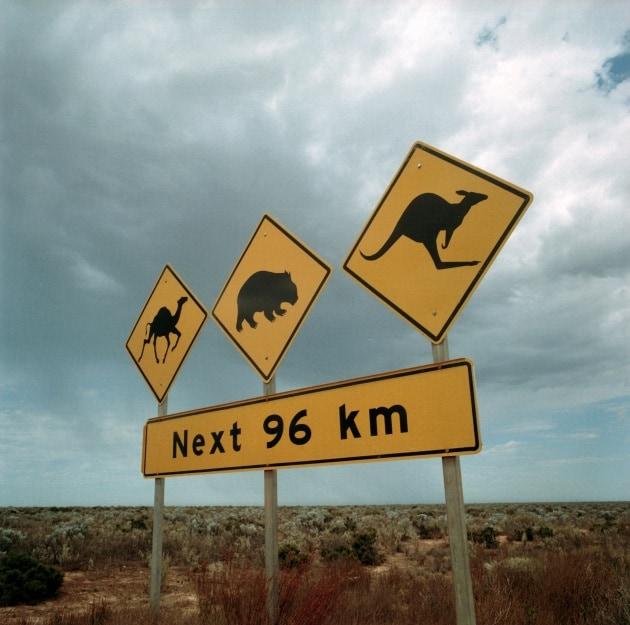 10 + 1 cose che (forse) non sai sull'Australia