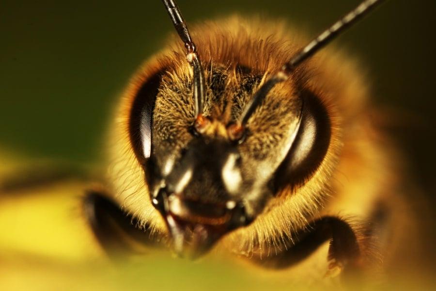 Le più dolorose punture di insetto