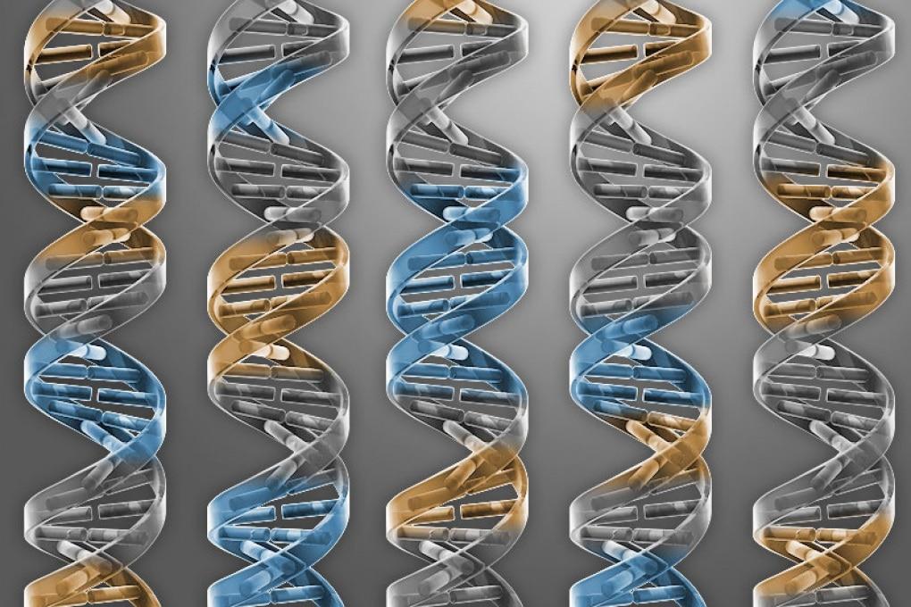 Crispr/Cas9, mutazioni indesiderate: effetti inattesi dell'editing genetico
