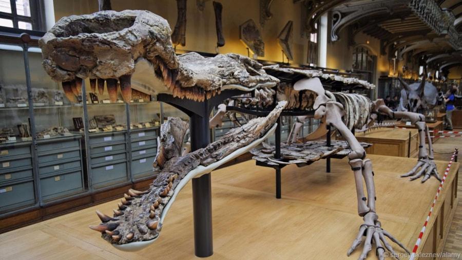sarcosuchusimperator