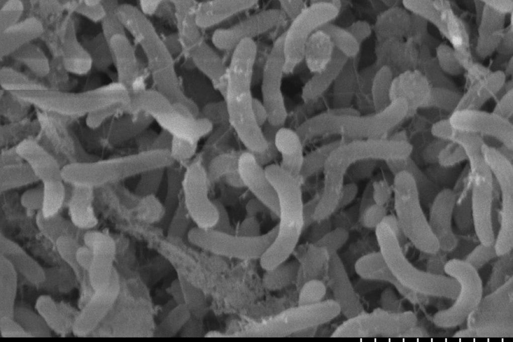 I batteri oceanici che governano il clima globale