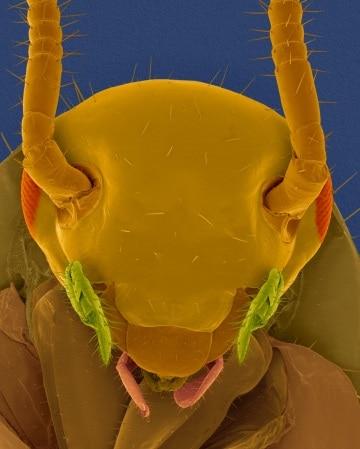 Il morso dello scarafaggio