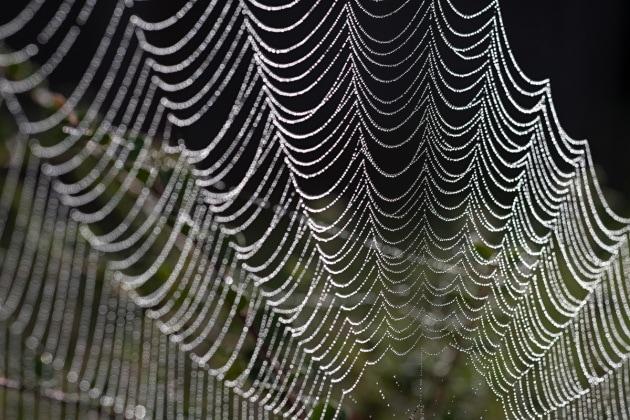 Le supertela dei ragni al grafene