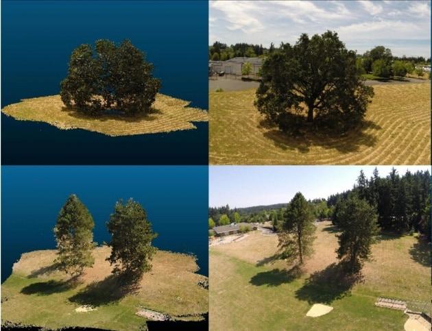 Una foresta virtuale misura gli effetti del global warming