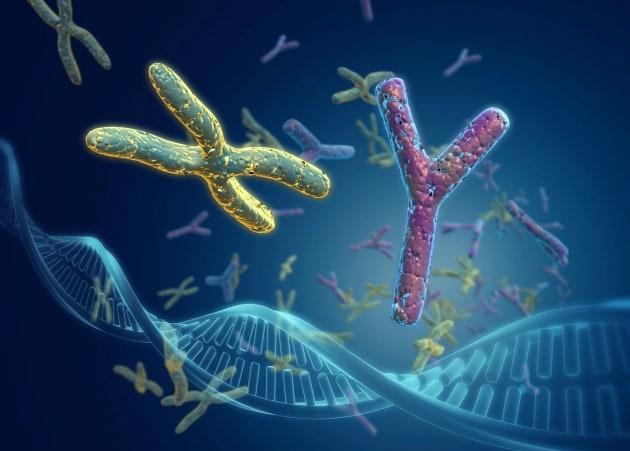 Nettie Stevens e i cromosomi X e Y