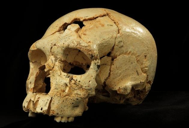 Nuove ipotesi sulle origini dell'Homo sapiens