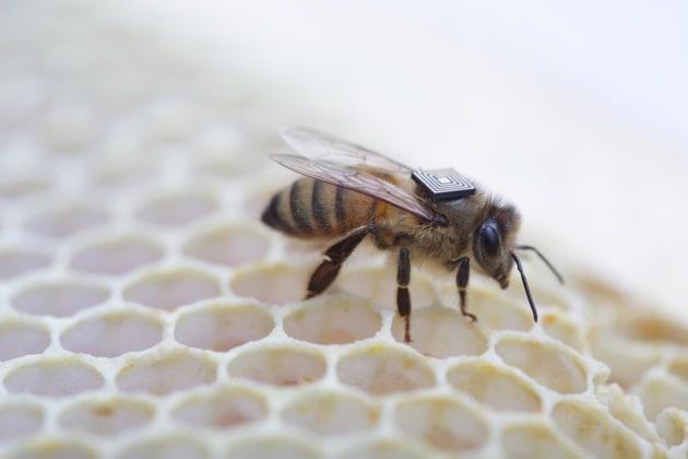 Gli zainetti per salvare le api