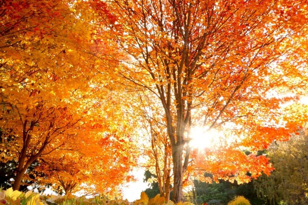 2015: caldo record a settembre e per i primi 9 mesi