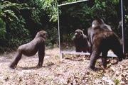 animali-specchio-coscienza