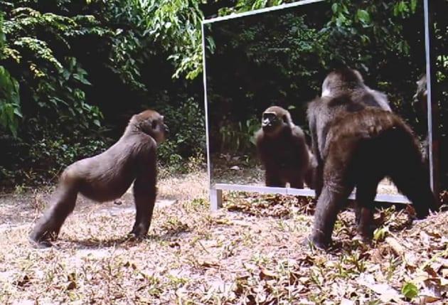 Animali allo specchio - Bambini che si guardano allo specchio ...