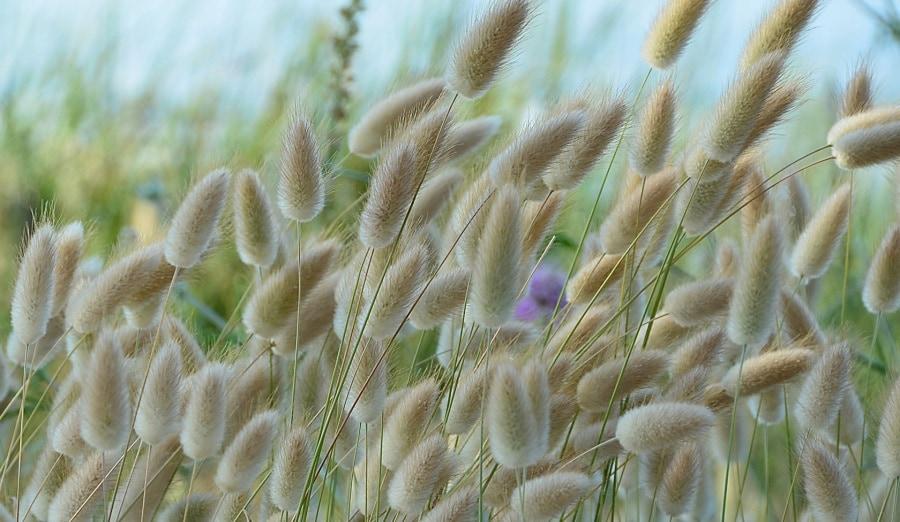 carezza-del-vento_amorvena-mengarelli