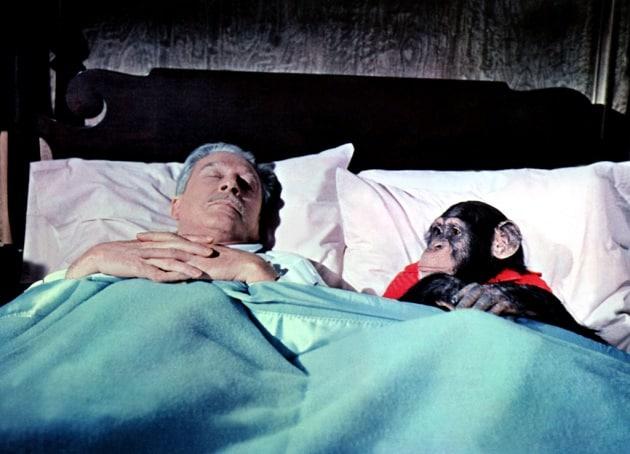 Il sonno efficiente degli umani