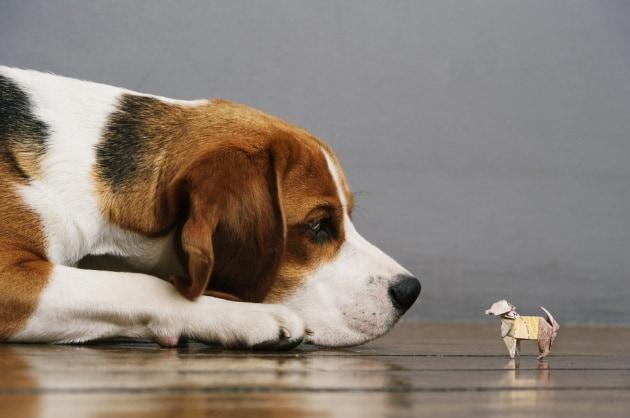 Dopo i micro maiali, cani geneticamente modificati