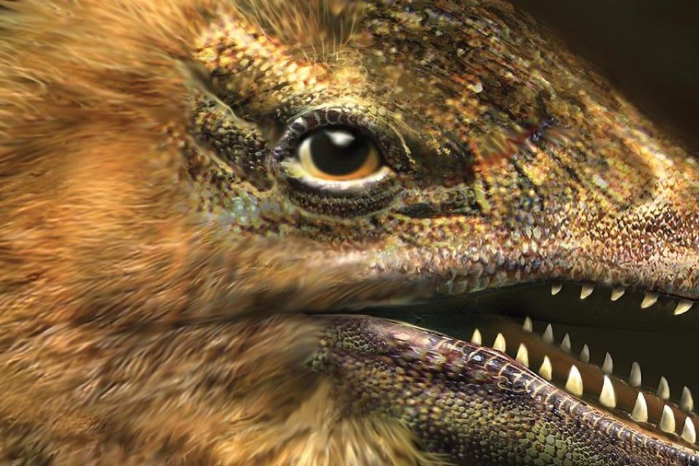 Il pollo con la faccia da dinosauro