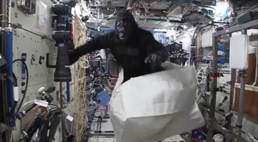 scott-kelly-gorilla-suit-video