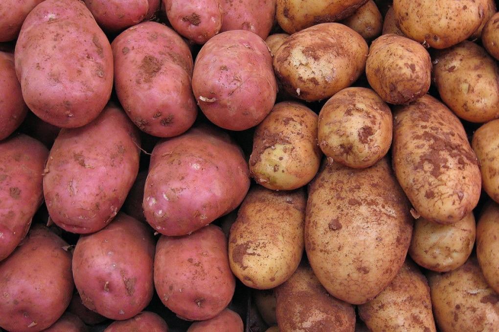 La Nasa seleziona le patate da coltivare (forse) su Marte