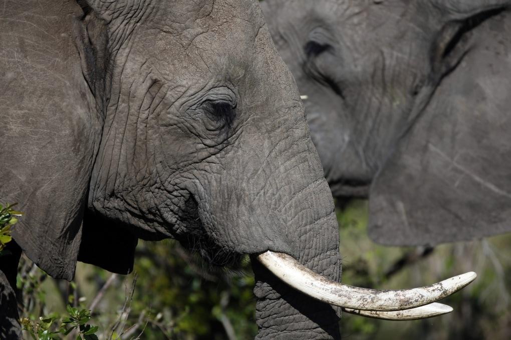 Animali più grandi hanno spermatozoi più grandi?
