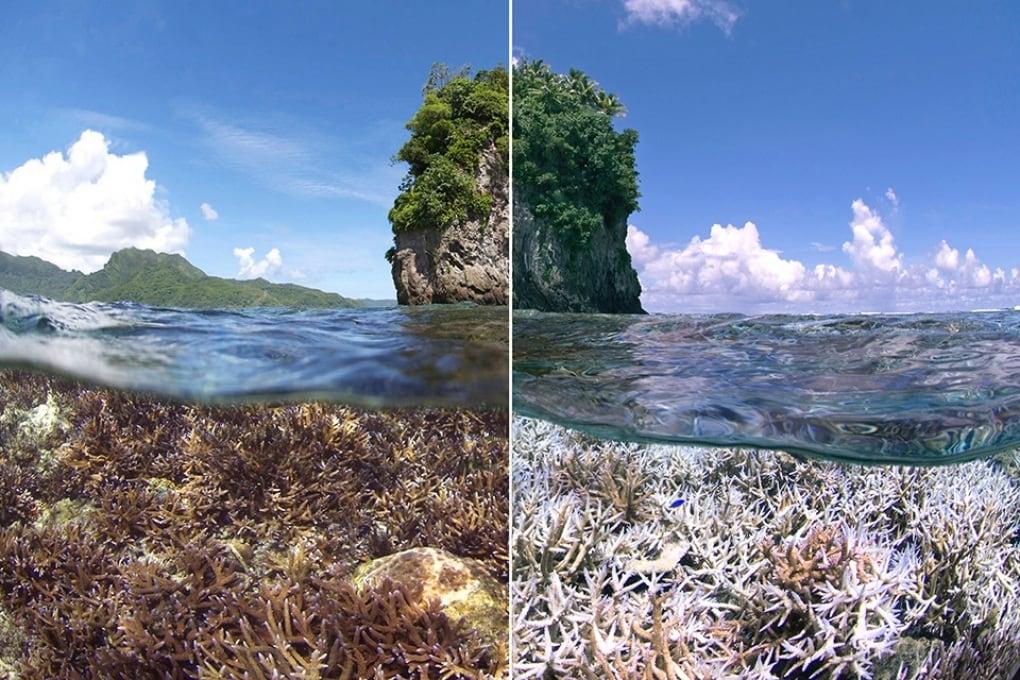 I coralli di tutto il mondo si stanno sbiancando
