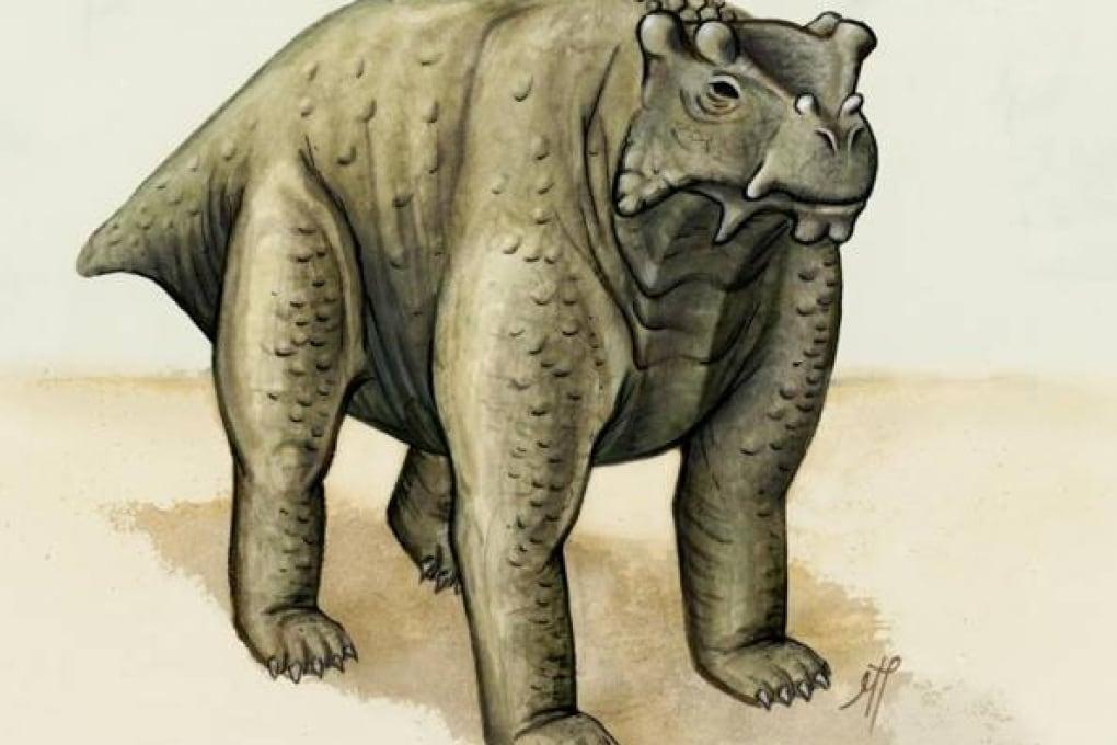 Bunostegos, il primo rettile con le zampe che spuntavano da sotto il corpo