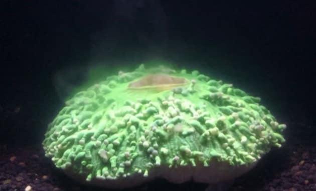 Coralli, il bleaching filmato in time-lapse