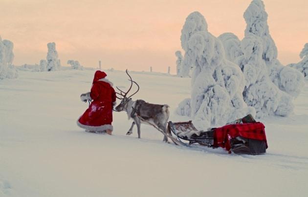 Di che sesso sono le renne di Babbo Natale?
