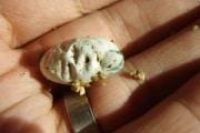 1505_la-nascita-di-un-camaleonte
