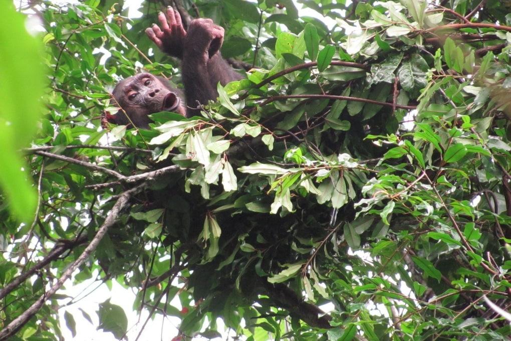 Il letto delle scimmie (e ora anche nostro)