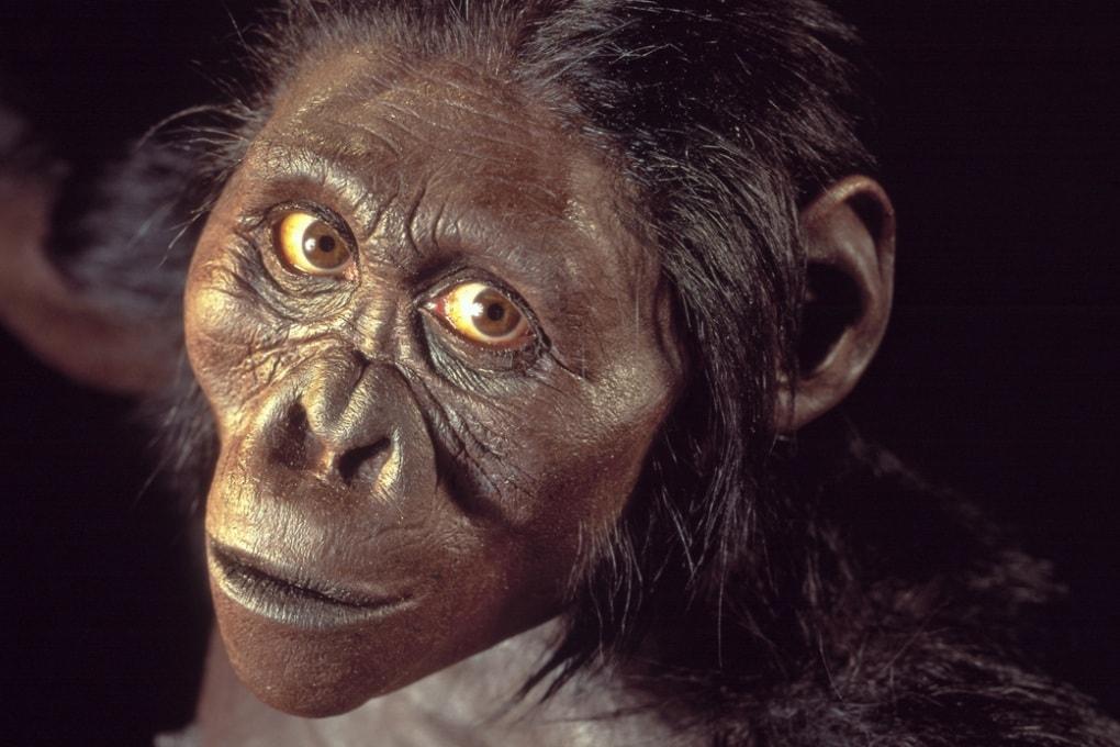La storia dell'australopiteco Lucy