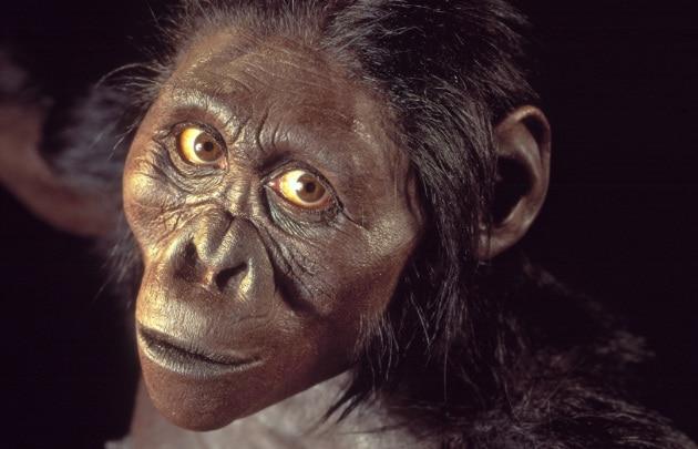 L'australopiteco Lucy scoperto oggi, 41 anni fa