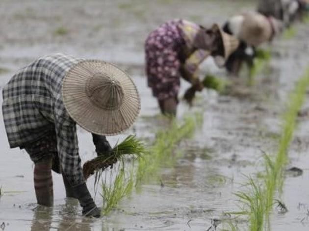 agricoltura_riso_xin-k8de-1280x960produzione