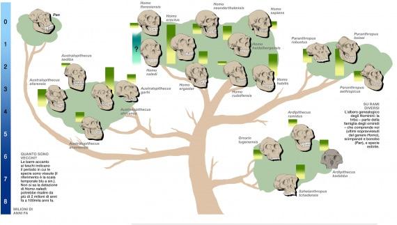 antropologia, evoluzione, ominidi, ominini