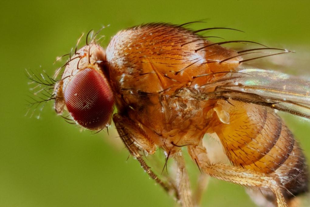 La paura ha basi biologiche simili negli uomini e nei moscerini