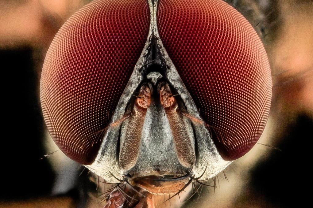 Anche gli insetti hanno una coscienza