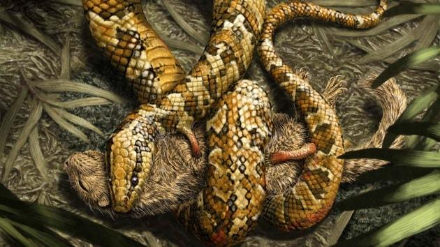 Gli antenati dei serpenti avevano quattro zampe