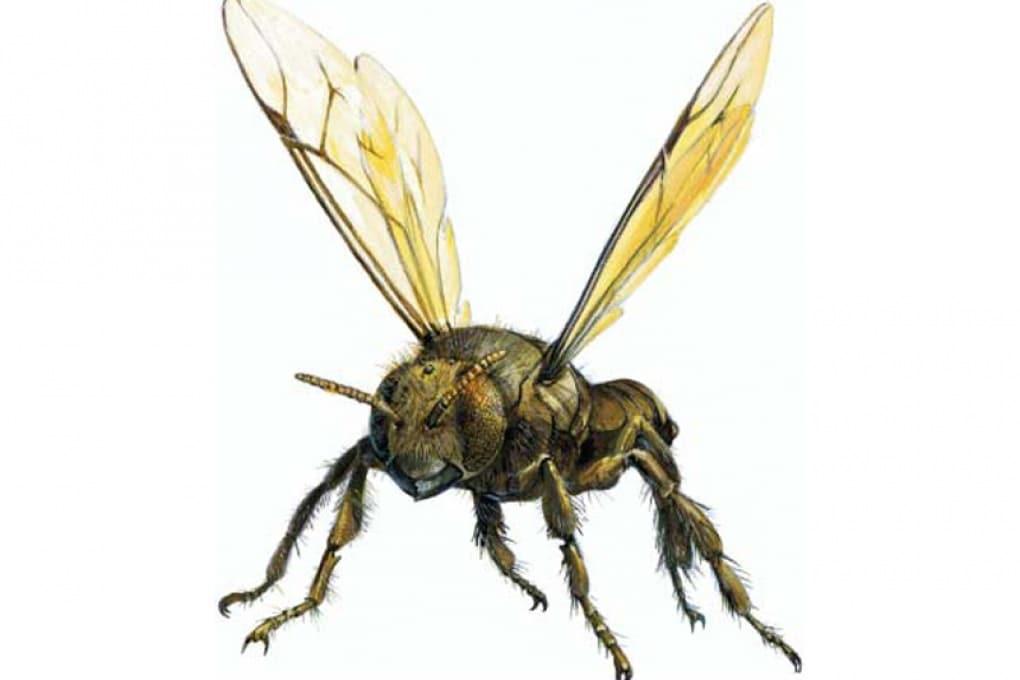 Le api dei Maya